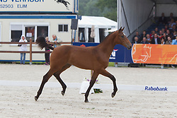 04 - G.Macoemba<br /> KWPN Paardendagen 2011 - Ermelo 2011<br /> © Dirk Caremans