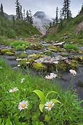Bagley Creek, Heather Meadows Recreation Area, North Cascades Washington
