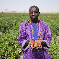 """Moustapha Kahoba is a 32-year-old farmer. His family used to grow peppers on their own land in Blayi, beside the Komadougou river. """"We left our fields to rent this one here in Toumour. We're three months late in the harvest, and we have to give half our profits to the landlord, but at least we feel safe,"""" says Moustapha. Growing peppers to sell on the market was very common in the Diffa Region, but the conflict has severely hampered production and sales."""