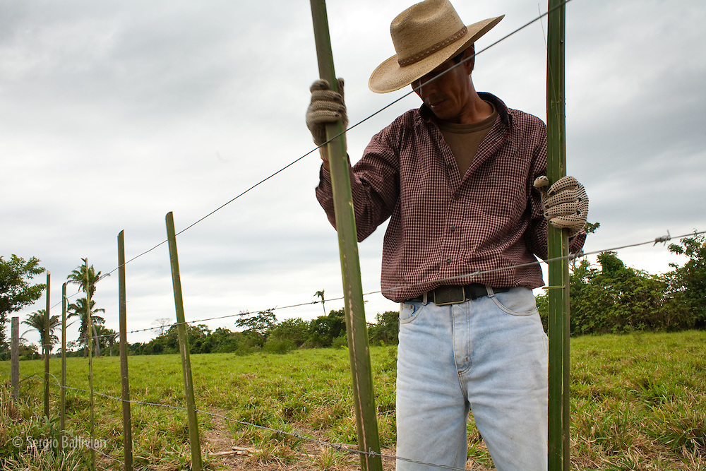 Cowboys fix barbed wire fences with natural and local materials in the Bolivian Amazon.  Often times they need to rely on creativity to solve problems in the field.