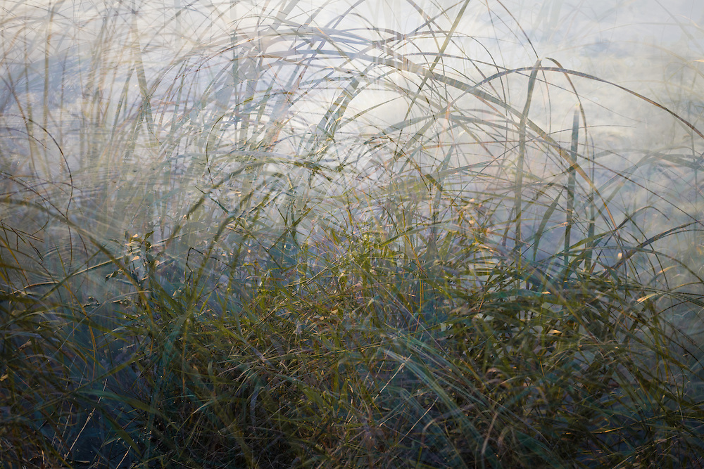 Landscape photo, multiple exposure of grass along the river's edge in silvery fog.