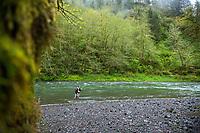 Fly fishing for steelhead on the Trask River near Tillamook, Oregon.