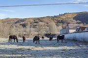 Black horses grazing beside a cemetery.