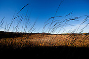 ICF_Prairie  Fall has taken over on the prairie.