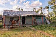 Horse on a house porch near La Palma, Pinar del Rio, Cuba.