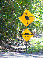 Road Sign warning to protect Southern Cassowary (Casuarius casuarius) in the Daintree region, Queensland, Australia