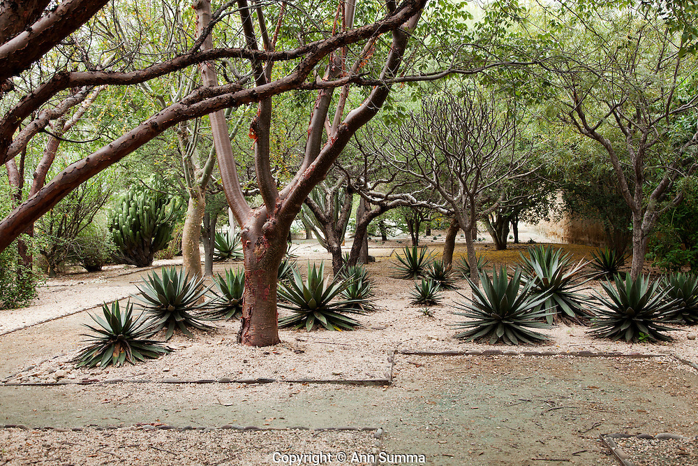 Oaxaca, Mexico: The design of the Jardin Ethno-Botanico in Oaxaca, Oaxaca, was influenced by Aztec motifs as visualized by artist Francisco Toledo and Luis Zarate. (Here seen in the crushed rock pathway).The garden has plants from the state that are indigenous. Many are medicinal, edible, or useful and significant culturally. (Photo: Ann Summa).