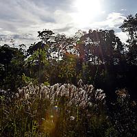 Selva en Kamarata. Edo. Bolivar. Venezuela. Jungle in Kamarata Edo. Bolivar. Febrero 23, 2013. Jimmy Villalta.