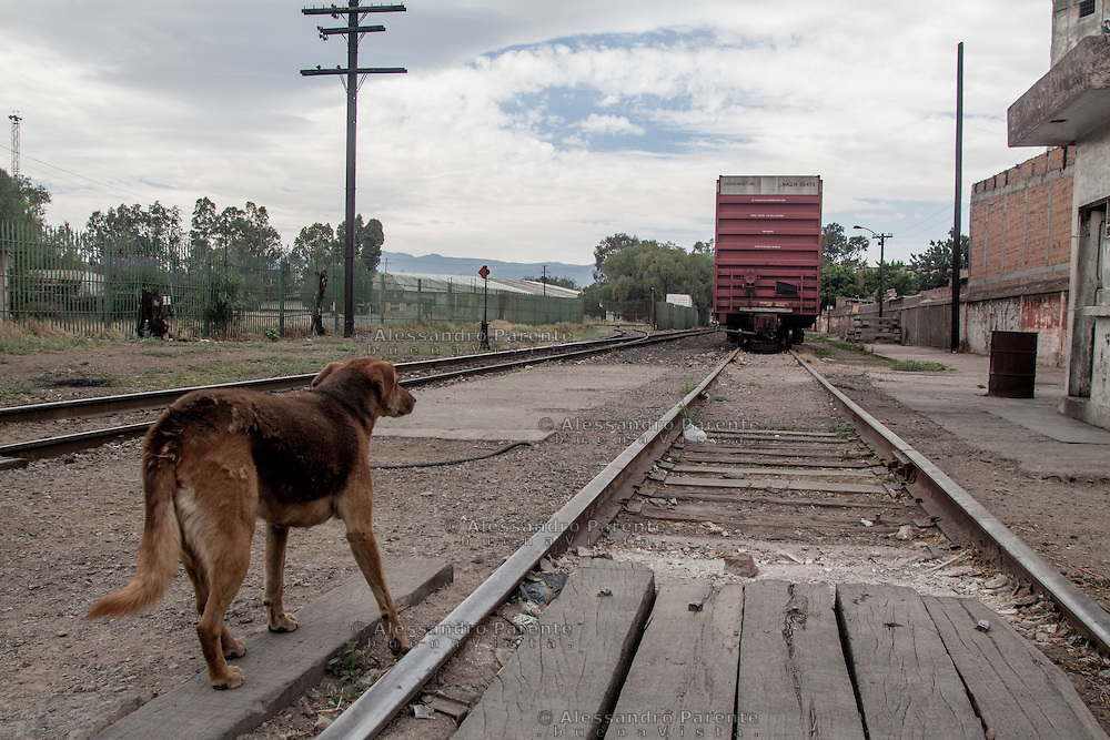 Canela watching the train leaving. The last goodbye and good luck to the migrant friends.<br /> Canela, guarda il treno appena partito per un ultimo saluto e un buona fortuna agli amici migranti.