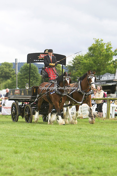 Andrew Whettton driving his own Shires, Maclee and John B<br /> 3rd  Pairs Turnouts