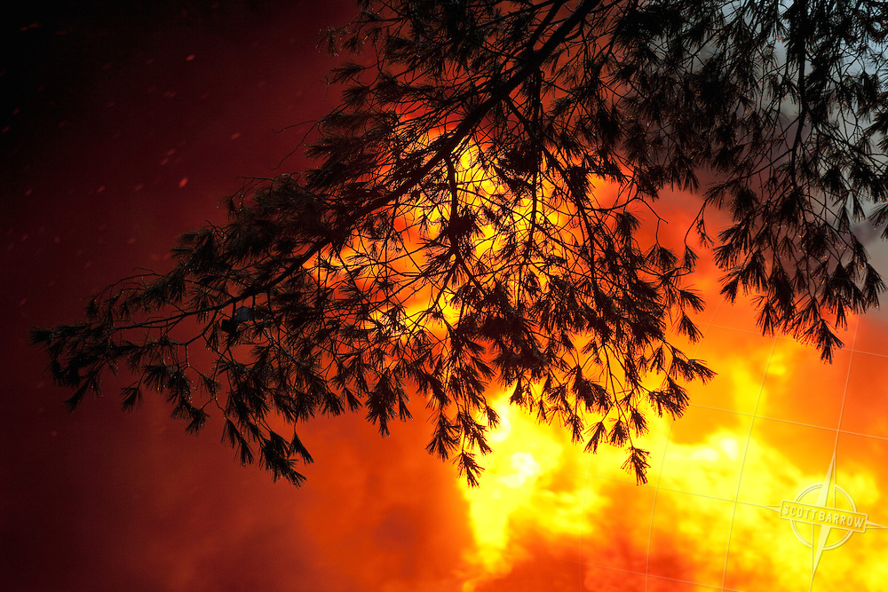 Forest fire burning through pine trees.