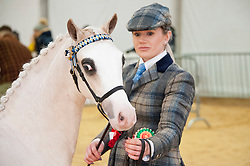 © Licensed to London News Pictures. 26/11/2019. Llanelwedd, Powys, Wales, UK. First place in the Royal Welsh Supreme Championship event. (more details at RWAS press office - catalogue number - 876)  Horse events take place on the second day of the Royal Welsh Winter Fair in Powys,  UK. Photo credit: Graham M. Lawrence/LNP