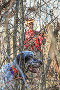 Ruffed Grouse and Woodcock Hunting in Wisconsin