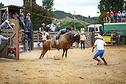 rodeo bull launches itself out of the chute as the bull rider ducks low and the bullfighters spring away at the Mid Northern Rodeo, Whangarei, New Zealand