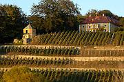 Dresden..Weinberg mit Pavillon und Villa am Elbeufer