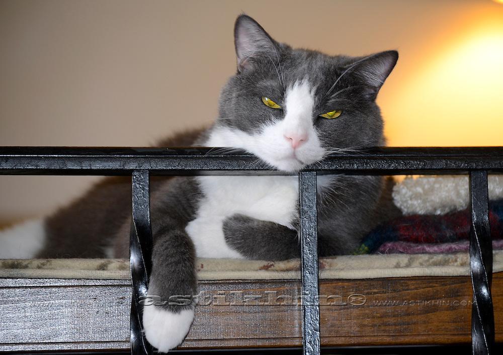 Cat Tabasca.