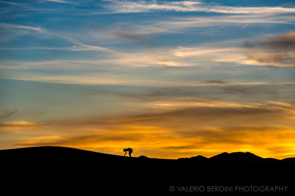 A girl silhouette at sunset on the mesquite flat sand dunes. Death Valley, Nevada. USA