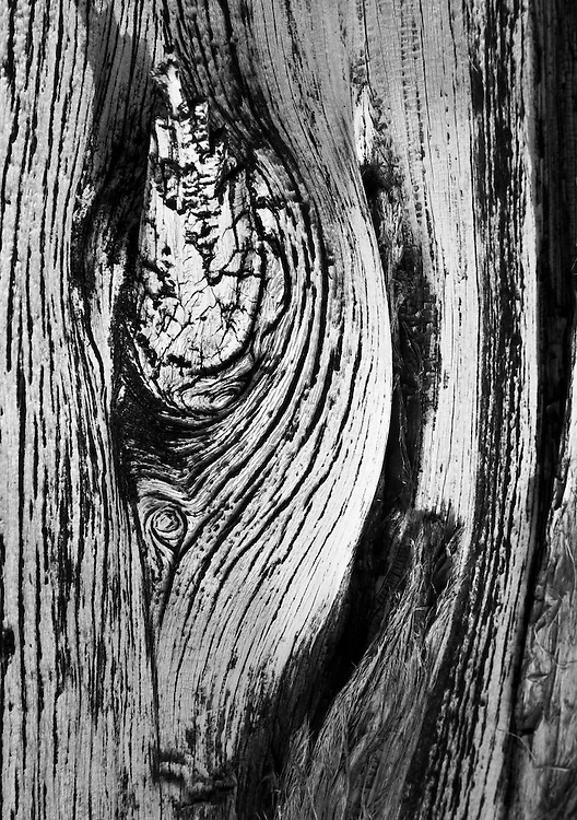 closeup of a tree in Yosemite National park
