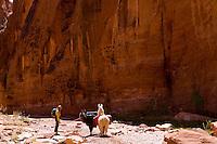 Llama Trekking in Southern Utah