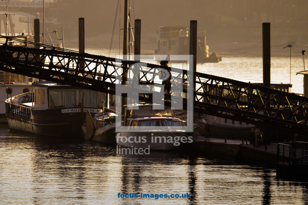 The bright morning sun warms a woman as she onto the houseboat moorings on Cheyne Walk, London <br /> Picture by Paul Davey/Focus Images Ltd +447966 016296<br /> 24/02/2016
