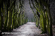 Old carpinus path in Jarocin. One of the longest in Poland