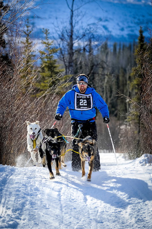 A skijorer leads his dogs out of the trees during a race outside of Whitehorse.