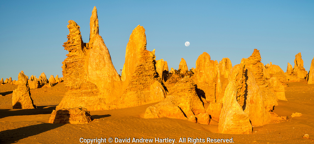 The moon rises over limestone formations in the Pinnacles Desert, Nambung National Park. Australia