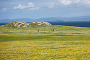 Visitors walking through buttercup meadow on Isle of Iona in the Inner Hebrides and Western Isles, Scotland