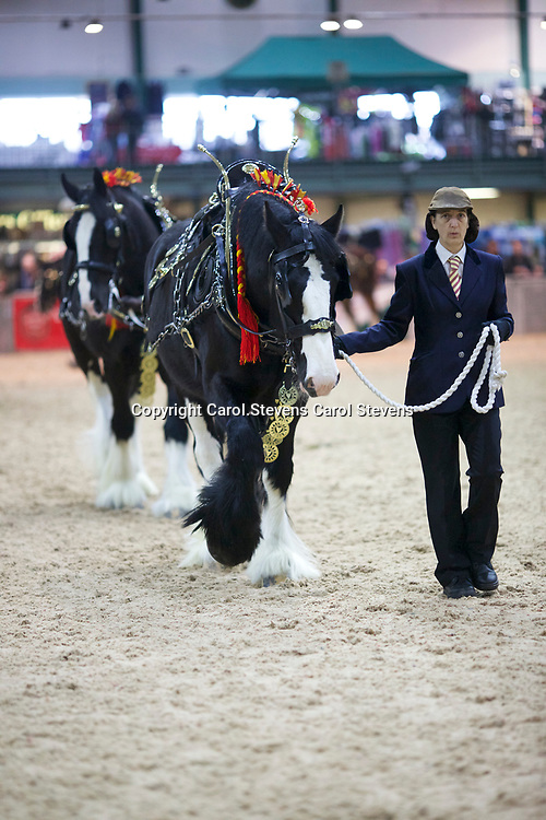 Shire Horse Society Spring Show 2017  Harness - Traditional and Decorated Classes