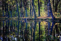 CZECH REPUBLIC VYSOCINA NEDVEZI 31OCT09 - View across the village pond in Nedvezi, Vysocina, Czech Republic.<br /><br />jre/Photo by Jiri Rezac<br /> <br /> <br />© Jiri Rezac 2007<br /> 9