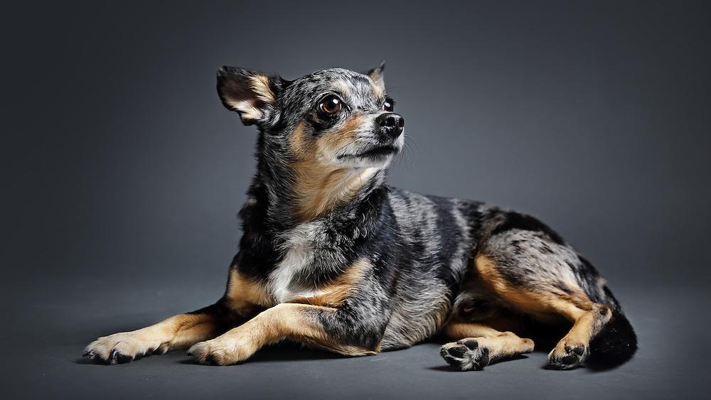 pet photographer, dog photographer, LA headshot, LA studio photographer, LA dog photographer, puppy picture, cute puppy,animal photo, dog picture,