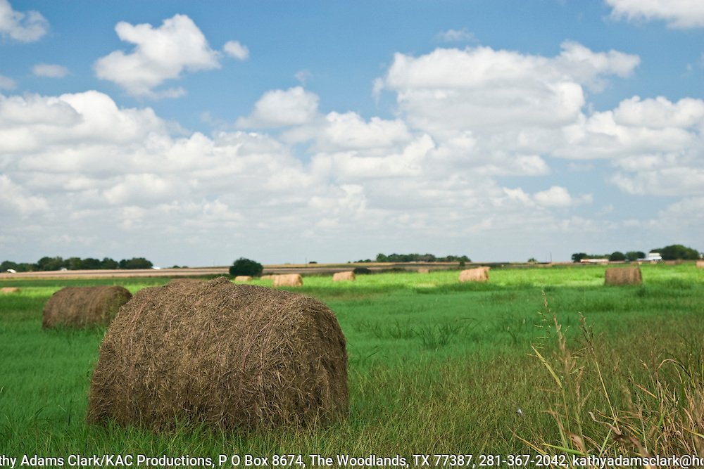 Rich soils of the Blackland Prairie and dedicated landowners have made the land around  Taylor, Texas,a prime place to grow hay, corn, cotton, and grains.
