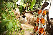 Pascaline Bampoky, 30, waters pepper plants in the garden she keeps outside her home in the town of Bignona, Senegal on Friday May 28, 2010.