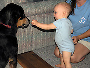 toddler boy shares snack with pet Rottweiler dog