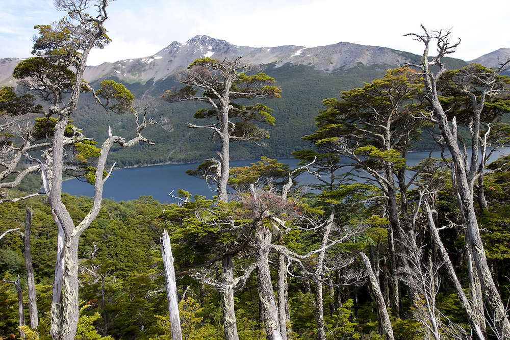 Lago Escondido, near the Port of Ushuaia, southernmost city in the world. Tierra del Fuego, Argentina.