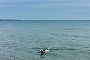 Lone dog, Jack Russell terrier, in the English Channel sea, La Manche, off the coast of Normandy, France