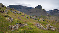 Keldudalur valley in Dýrafjörður fiord, West fiords of Iceland. Mount Hundshorn in background.