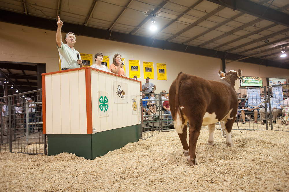 Livestock Auction<br /> Maryland State Fair 2013