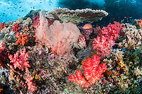 Waves crash over a Rainbow of Soft Corals, and Coral Grouper<br /> <br /> Shot in Indonesia