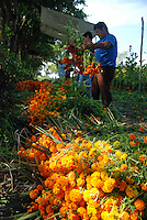 """MEXICO, Veracruz, Tantoyuca, Oct 27- Nov 4, 2009. Vendors bundle thousands of fresh-cut, brilliant orange """"cempasuchil,"""" or """"20-petal flowers.""""  """"Xantolo,"""" the Nahuatl word for """"Santos,"""" or holy, marks a week-long period during which the whole Huasteca region of northern Veracruz state prepares for """"Dia de los Muertos,"""" the Day of the Dead. For children on the nights of October 31st and adults on November 1st, there is costumed dancing in the streets, and a carnival atmosphere, while Mexican families also honor the yearly return of the souls of their relatives at home and in the graveyards, with flower-bedecked altars and the foods their loved ones preferred in life. Photographs for HOY by Jay Dunn."""