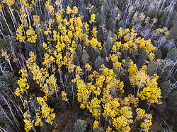Aerial of Aspens in fall color on Elk Creek below Ash Mountain, Vermejo Park Ranch, New Mexico, USA.