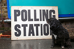 © Licensed to London News Pictures. 12/12/2019. London, UK. A dog looks at a polling station sign in Haringey, north London. Polling stations have opened as the nation votes to decide the next UK Government in the first December election since 1923. Photo credit: Dinendra Haria/LNP