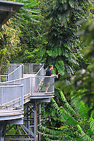The Mamu Canopy Walkway extends for 350 metres at a height of 15 metres above the ground.The Atherton Tablelands, far north Queensland, Australia