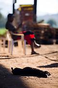 Itatiaiucu_MG, Brasil...Cachorro dormindo proximo a uma borracharia em Itatiaiucu...A dog sleeping next to a repair shop in Itatiaiucu...Foto: LEO DRUMOND / NITRO