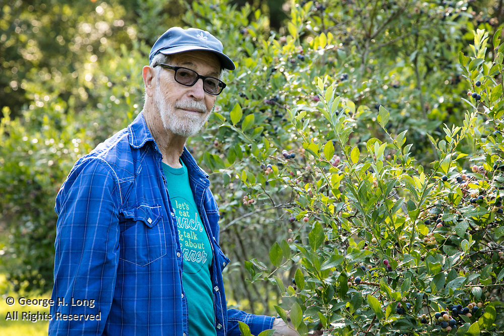 George Hampton picks blueberries at Sunhillow Berry Farm near Pearl River, Louisiana