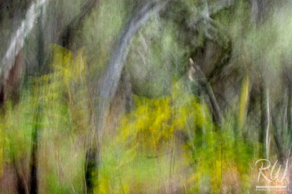 Oak Trees and Fall Foliage Photo Impressions, Big Dalton Canyon Wilderness Park, California