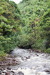 Papaikou:  Natural beauties are around every curve on a four-mile stretch of scenic road off State Highway 19, about eight miles north of Hilo.  The stream pictured feeds into Onomea Bay.