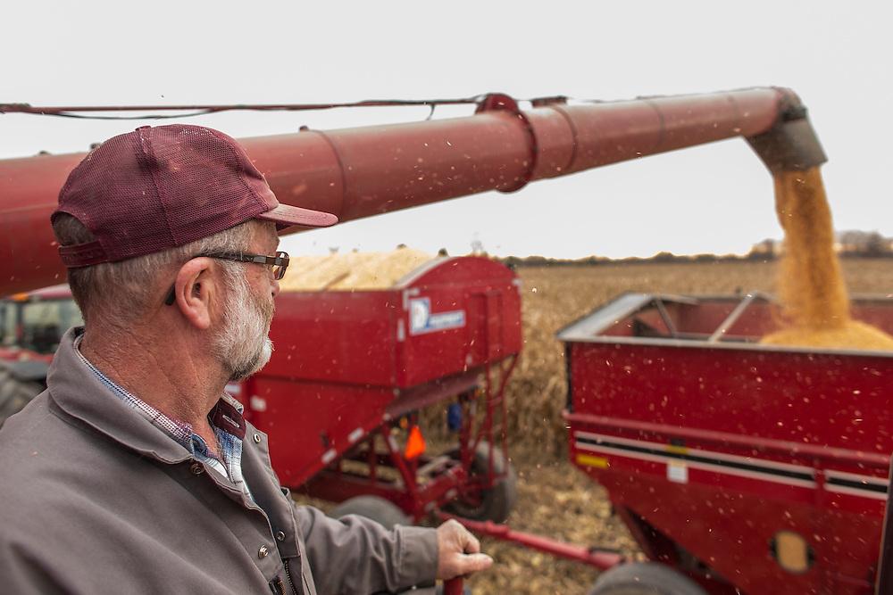 Tom Oegema of Oegema Grains Ltd. harvests his corn in his field inTalbotville, Ontario, Monday,  November 3, 2014.<br /> Farmers Forum/ Geoff Robins