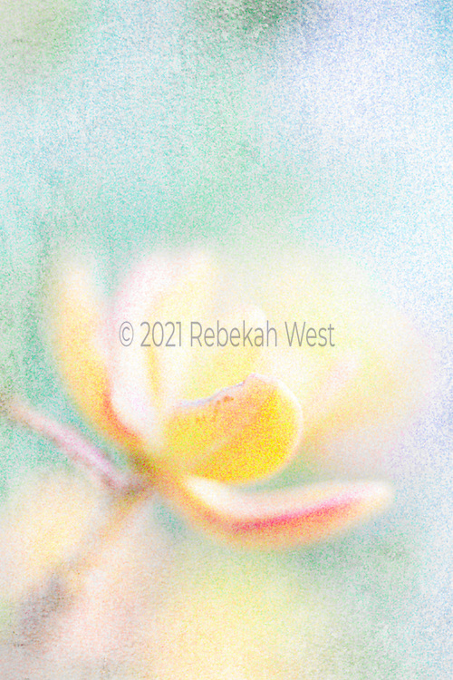 like through a rainy window a yellow peach pink succulent petaled flower reaches up from lower left corner toward upper right blurs into background in vertical field, background clear wash of blues and greens, hint of purple and accents of yellow and peach, greenery undertones and overtones, greenery, flower art, feminine, high resolution, licensing, iridescent, vertical, 3396 x 5095