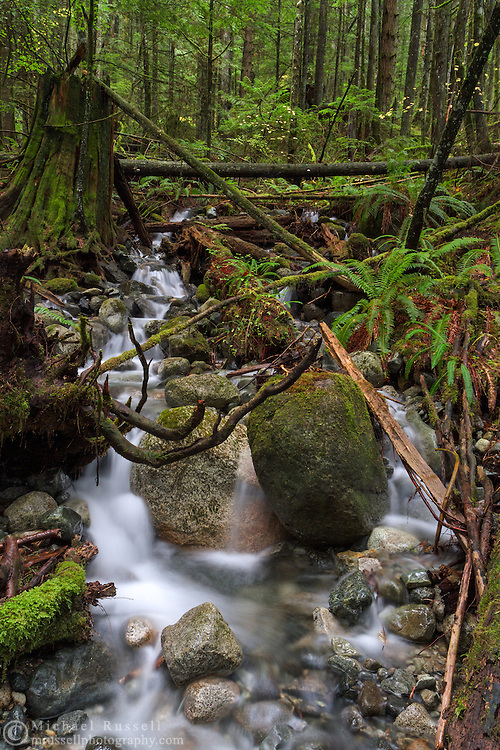 A jumble of boulders, stumps and fallen trees along an unnamed creek flowing into Rolley Lake, in Rolley Lake Provincial Park, Mission, British Columbia, Canada